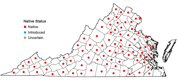 Locations ofAplectrum hyemale (Muhl. ex Willd.) Torrey in Virginia
