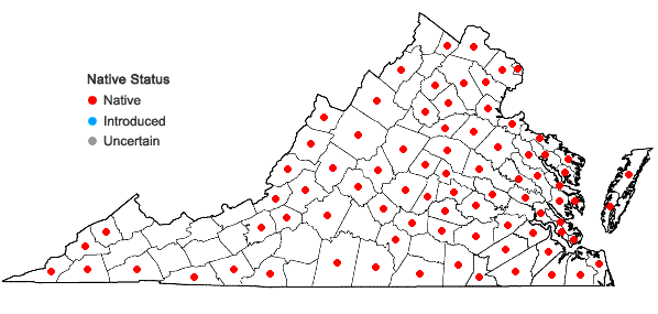 Locations ofAralia spinosa L. in Virginia