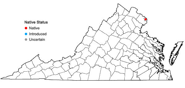 Locations ofArchidium alternifolium (Dicks. & Hedw.) Schimp. in Virginia