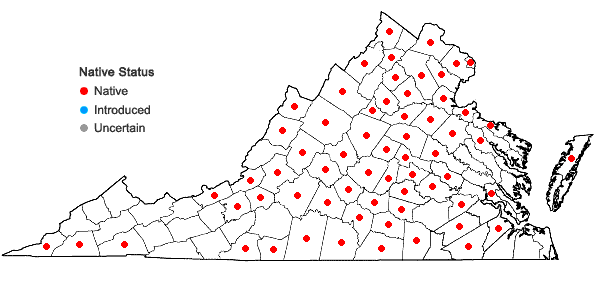 Locations ofArisaema dracontium (L.) Schott in Virginia