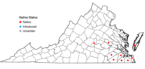 Locations ofAristida lanosa Muhl. ex Ell. in Virginia