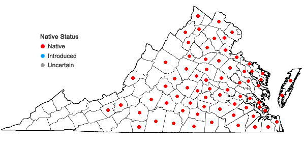 Locations ofAristida oligantha Michx. in Virginia