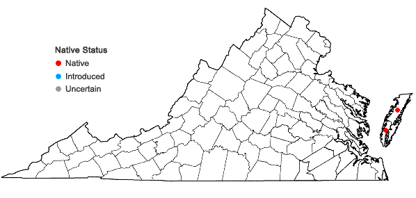 Locations ofAristida tuberculosa Nutt. in Virginia