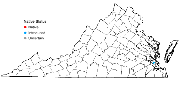 Locations ofArivela viscosa (L.) Raf. in Virginia