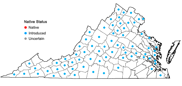 Locations ofArrhenatherum elatius (L.) J. & K. Presl var. elatius in Virginia