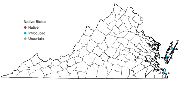 Locations ofArtemisia stelleriana Bess. in Virginia