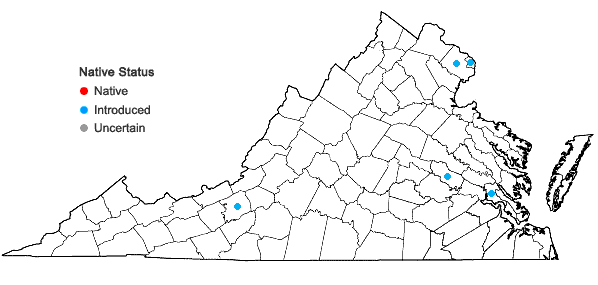 Locations ofArum italicum P. Miller in Virginia