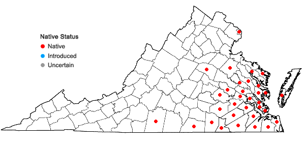 Locations ofArundinaria tecta (Walt.) Muhl. in Virginia
