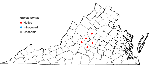 Locations ofAsarum chueyi B.T. Sinn in Virginia