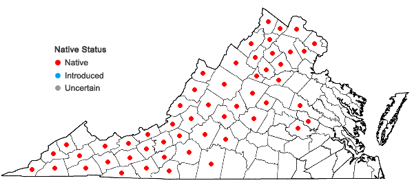 Locations ofAsclepias quadrifolia Jacq. in Virginia