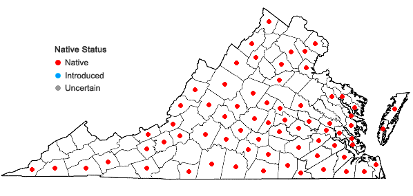 Locations ofAsclepias variegata L. in Virginia