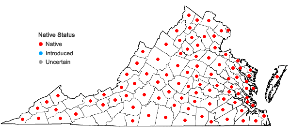 Locations ofAsimina triloba (L.) Dunal in Virginia