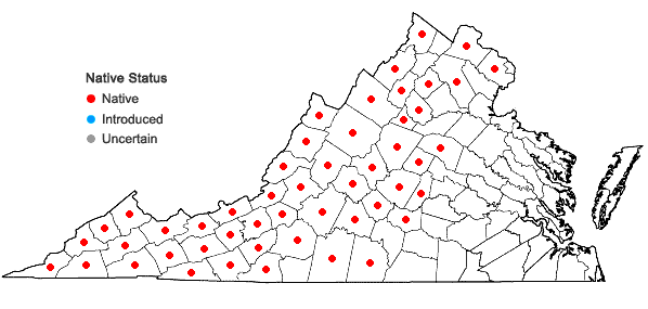 Locations ofAsplenium montanum Willd. in Virginia