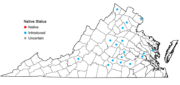 Locations ofAster tataricus L. f. in Virginia