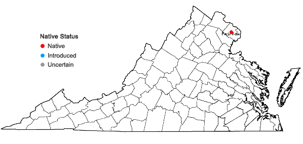 Locations ofAtriplex dioica Raf. in Virginia