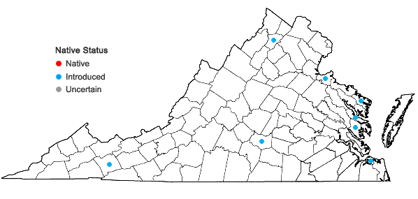 Locations ofAtriplex patula L. in Virginia