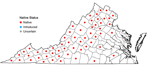 Locations ofAureolaria laevigata (Raf.) Raf. in Virginia