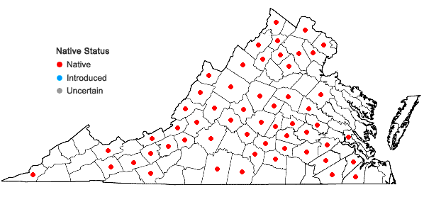 Locations ofAureolaria pedicularia (L.) Raf. in Virginia