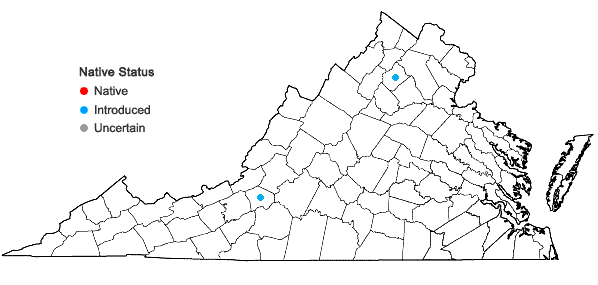 Locations ofAurinia saxatilis (L.) Desv. ssp. saxatilis in Virginia
