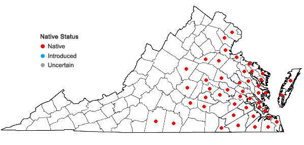 Locations ofBaccharis halimifolia L. in Virginia