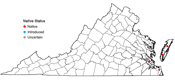 Locations ofBacopa monnieri (L.) Wettstein in Virginia
