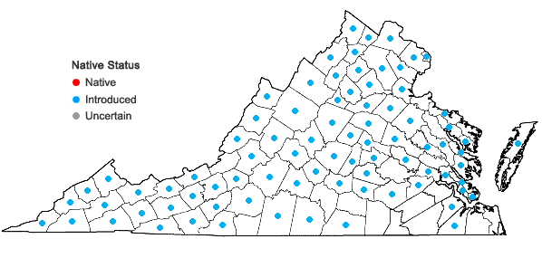 Locations ofBarbarea vulgaris R. Brown in Virginia