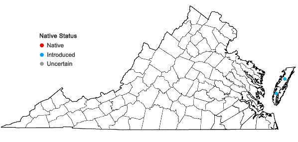 Locations ofBassia hirsuta (L.) Aschers. in Virginia
