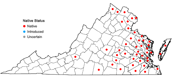 Locations ofBidens laevis (L.) B.S.P. in Virginia