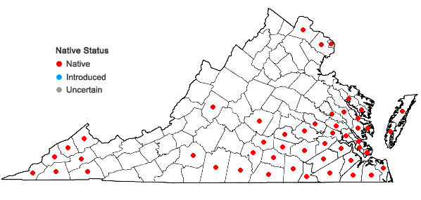 Locations ofBignonia capreolata L. in Virginia