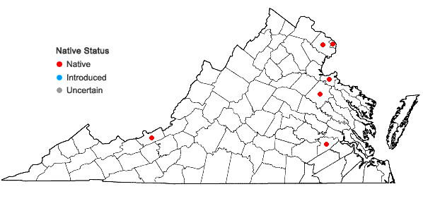 Locations ofBolboschoenus fluviatilis (Torrey) Sojak in Virginia