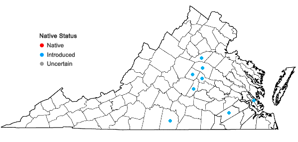 Locations ofBoltonia diffusa Ell. var. diffusa in Virginia