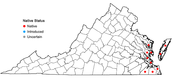Locations ofBorrichia frutescens (L.) DC. in Virginia