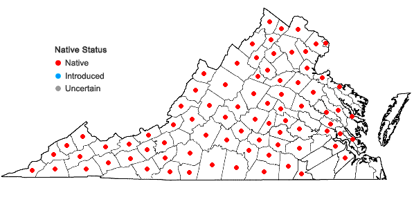 Locations ofBrachyelytrum erectum (Schreb. ex Spreng.) Beauv. in Virginia