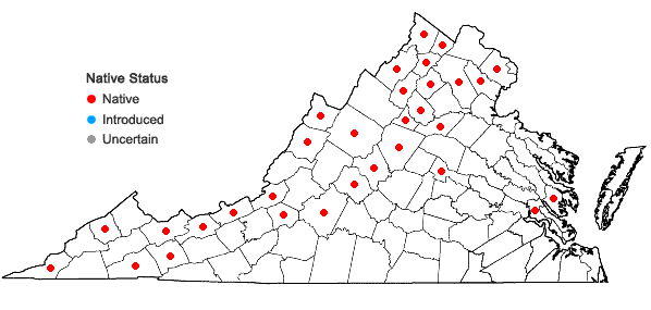 Locations ofBrachythecium rivulare Schimper in Virginia