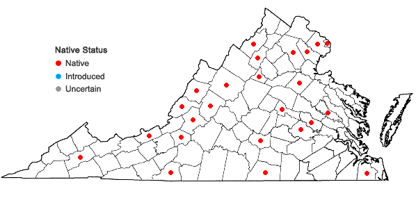 Locations ofBrachythecium salebrosum (Hoffm. ex F. Weber & D. Mohr) Schimp. in Virginia