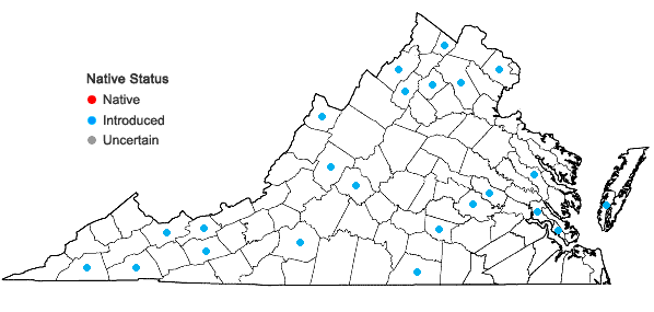Locations ofBrassica nigra (Linnaeus) W. D. Koch in Virginia