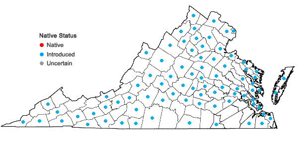 Locations ofBrassica rapa Linnaeus in Virginia