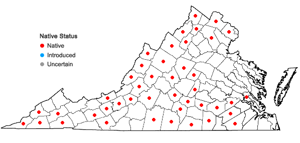 Locations ofBrickellia eupatorioides (L.) Shinners var. eupatorioides in Virginia