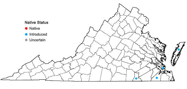 Locations ofBriza minor L. in Virginia