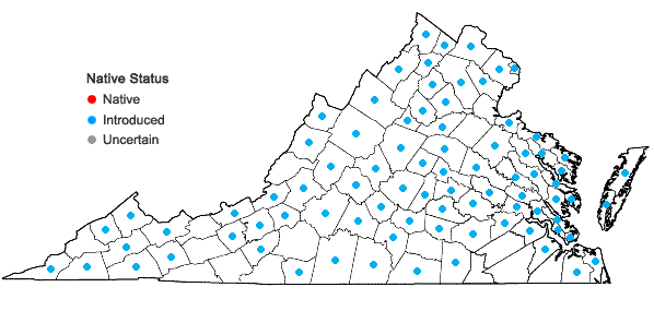 Locations ofBromus racemosus L. in Virginia