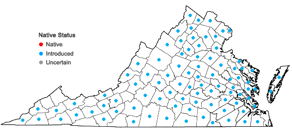 Locations ofBuglossoides arvensis (L.) I.M. Johnston var. arvensis in Virginia
