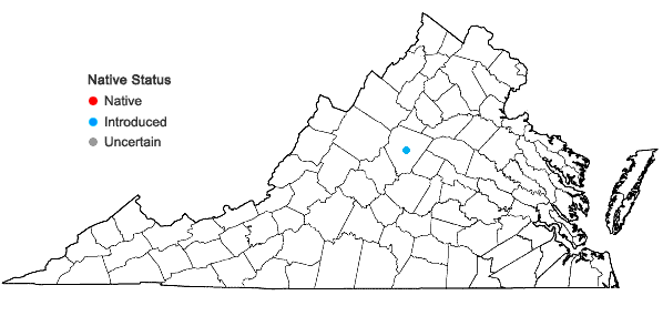 Locations ofBulbostylis barbata (Rottb.) C.B. Clarke in Virginia