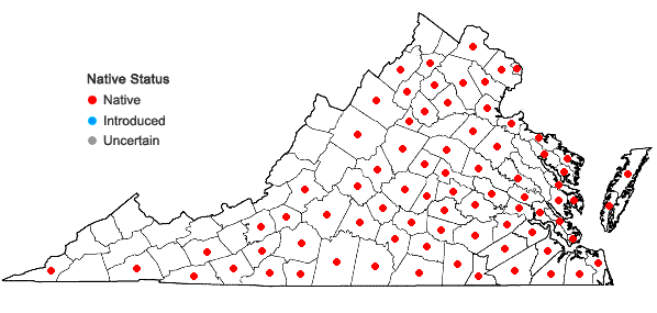 Locations ofBulbostylis capillaris (L.) Clarke in Hook. in Virginia