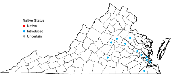 Locations ofCallicarpa dichotoma (Loureiro) K. Koch in Virginia