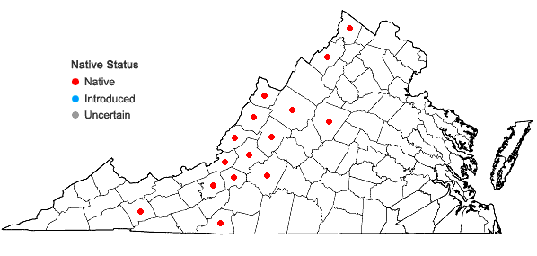 Locations ofCalystegia spithamaea (L.) Pursh ssp. purshiana (Wherry ) Brummitt in Virginia