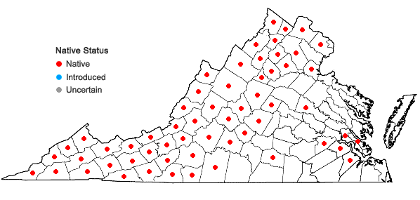 Locations ofCampanulastrum americanum (L.) Small in Virginia