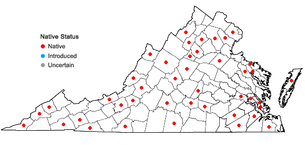 Locations ofCampyliadelphus chrysophyllus (Brid.) Kanda in Virginia