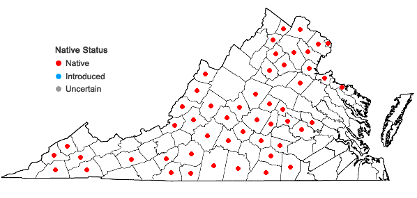 Locations ofCardamine angustata O. E. Schulz in Virginia