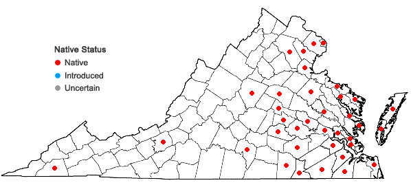 Locations ofCarex albicans Willd. ex Sprengel var. emmonsii (Dewey ex Torr.) Rettig in Virginia