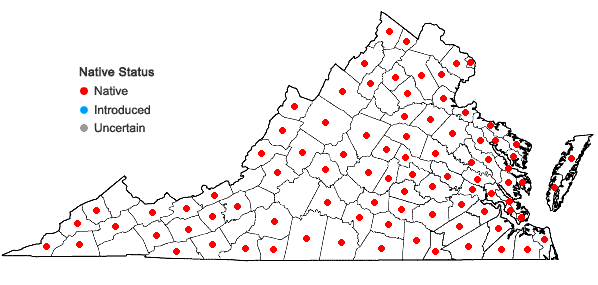 Locations ofCarex albicans complex in Virginia